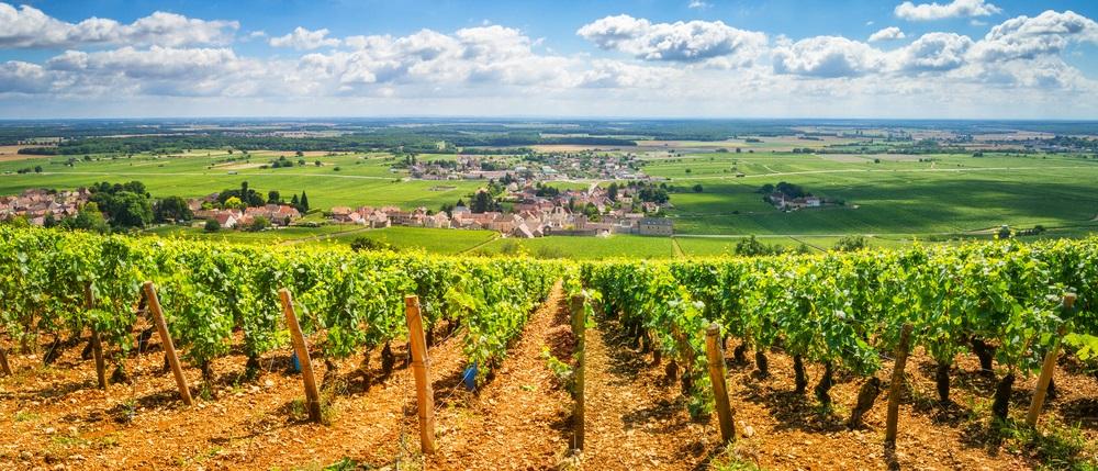 Bourgogne: een echte wijnstreek